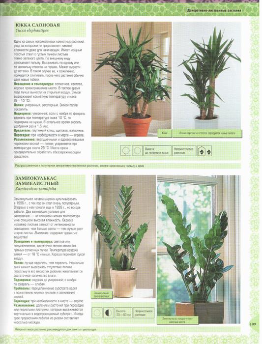 Комнатные Растения Иллюстрированный Справочник