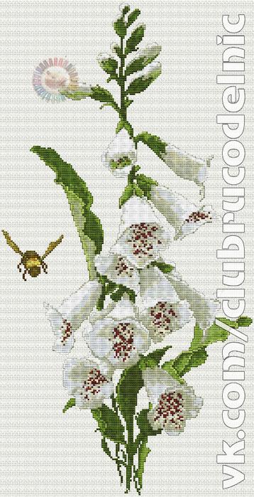 White Foxgloves (358x700, 328Kb)
