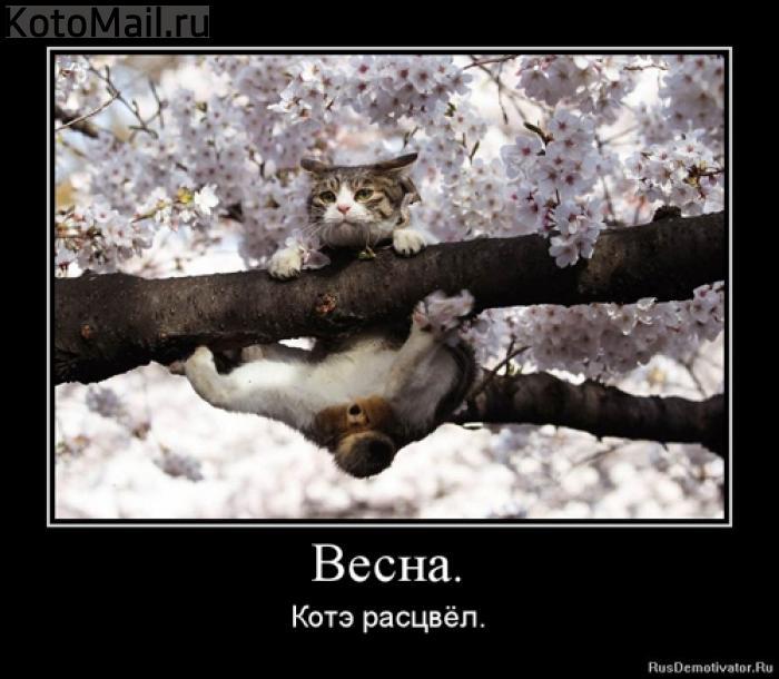 vesnakote_rascvyol (700x610, 57Kb)