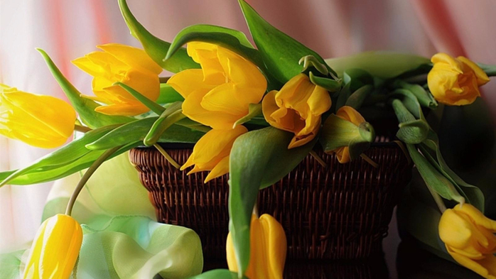 127507237_yellow_tulips_in_a_basket_still_life_nature_1600x900_hdwallpaper1465327 (698x393, 275Kb)