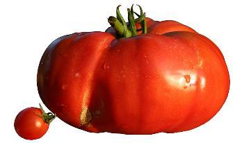 tomates-335x206 (335x206, 9Kb)