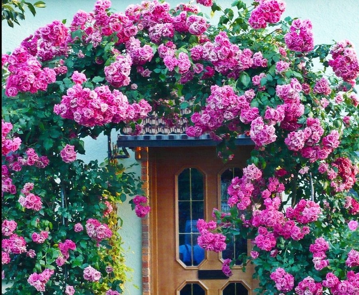 doors_flowers_24 (700x576, 426Kb)