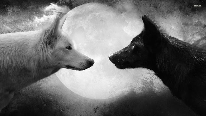 wolf_wallpaper_black_and_white_by_lmmphotos-d7kyjih (700x393, 76Kb)