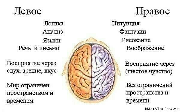 3925311_mozgi_pravoe_i_levoe (604x377, 108Kb)