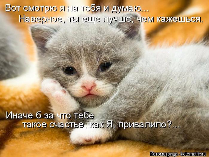 kotomatritsa_3I (700x524, 394Kb)