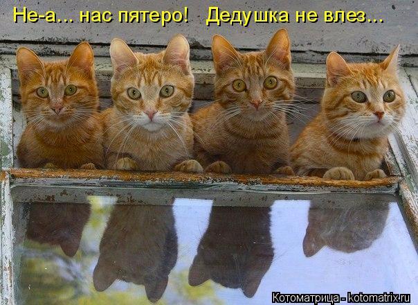 kotomatritsa_F (604x440, 288Kb)