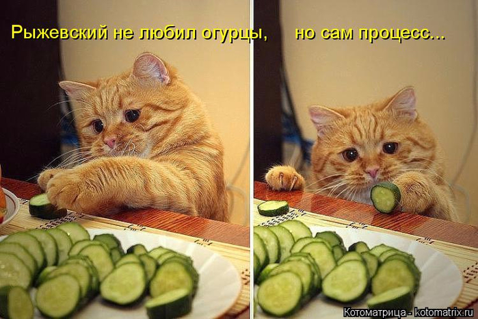 kotomatritsa_z (700x466, 348Kb)