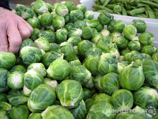First-Brussels-Sprouts (533x400, 406Kb)