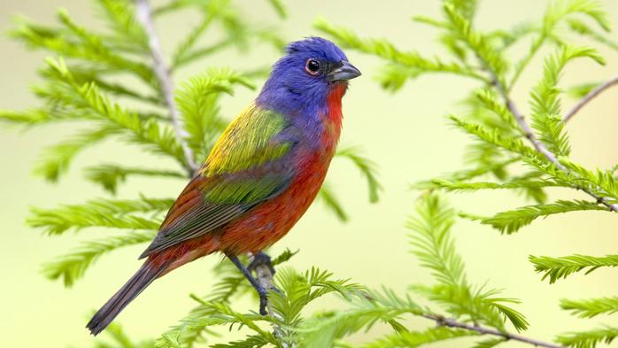 птицы 11 (700x393, 307Kb)