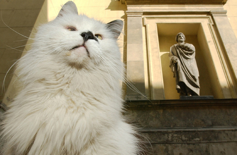 russia-museum-cats (465x305, 169Kb)