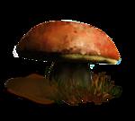 гриб72 (150x135, 23Kb)