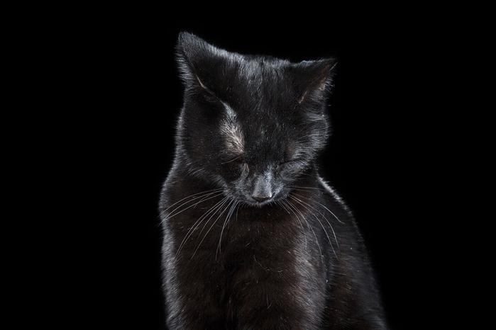 fotograf-snimaet-primechatelnye-portrety-kotov-podcherkivayushhie-ix-lichnost-05 (700x466, 114Kb)