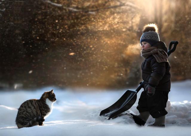 Снег и кошки2 (640x456, 137Kb)
