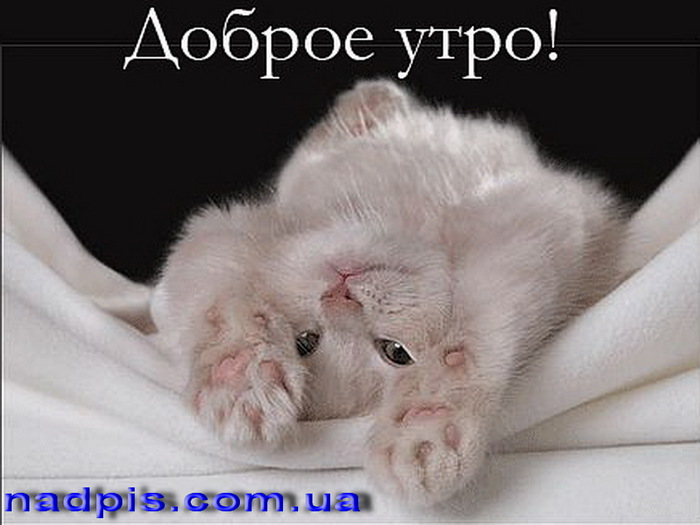 3676705_httpnadpis_com__uadobroeutroskotyonkom (700x525, 79Kb)
