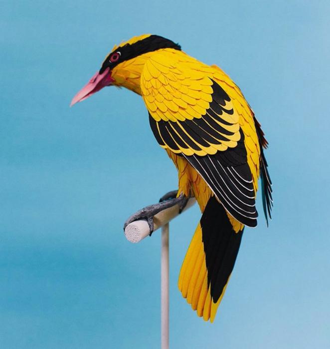 бумажные птицы Дианы Бельтран Эрерра 4 (662x700, 323Kb)