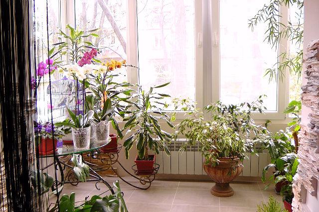 Фото дизайн квартир с комнатными цветами
