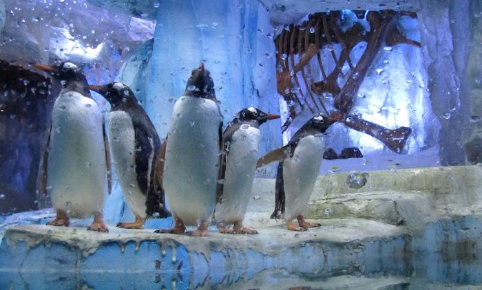 дубайский аквариум в дубай молл 8 (700x422, 360Kb)