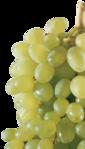 ������ 0004-clipart-vinograd (399x700, 340Kb)