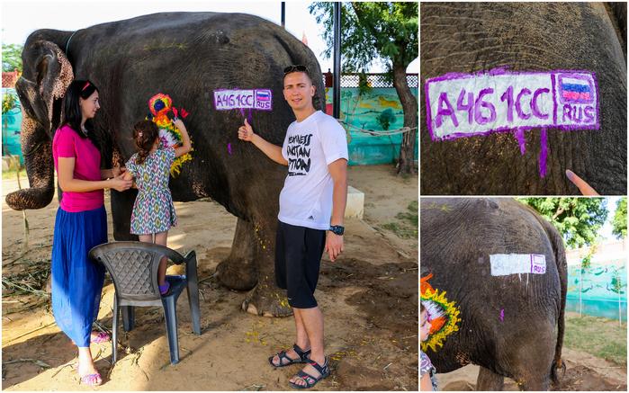 2015 10 08 Джайпур слоны1 (700x437, 512Kb)