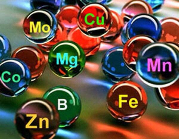 Краткое описание свойств микро- и макроэлементов (600x466, 63Kb)