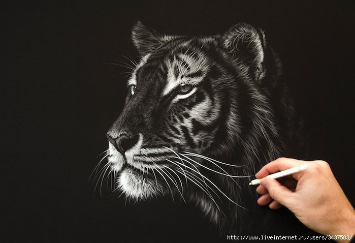 Реалистичные портреты диких животных/3437583_realistichnyeportrety241 (700x478, 133Kb)