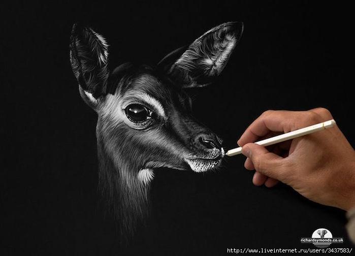 Реалистичные портреты диких животных/3437583_realistichnyeportrety243 (700x504, 88Kb)