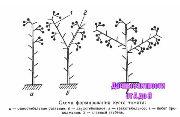 image (5) (601x391, 151Kb)