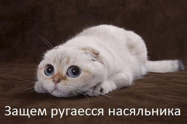 5053532_koshka (600x399, 49Kb)
