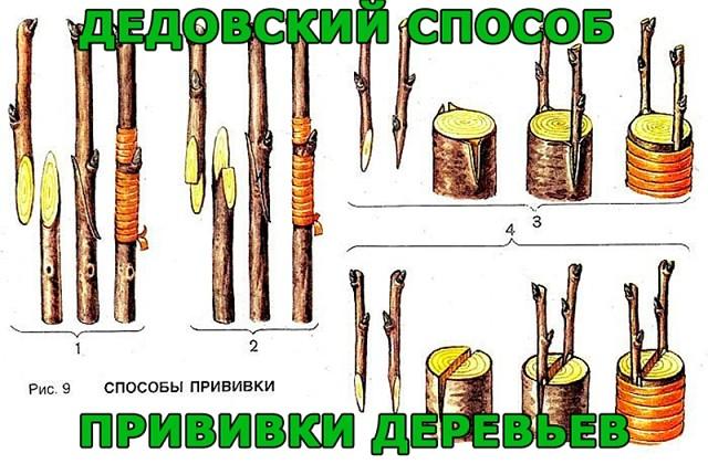 image (640x420, 89Kb)