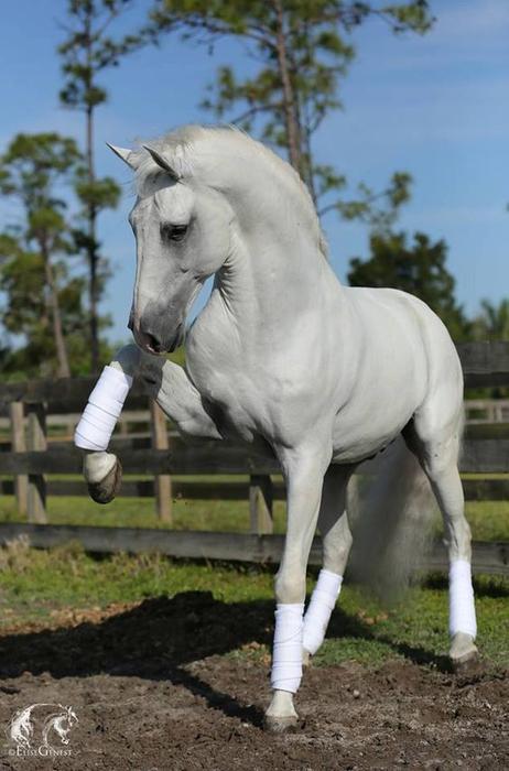 Лошадь красивая картинки