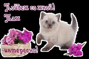 Далее про  кошек (300x199, 71Kb)