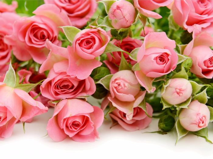 pink-roses-flowers-rozy-6237 (700x525, 401Kb)