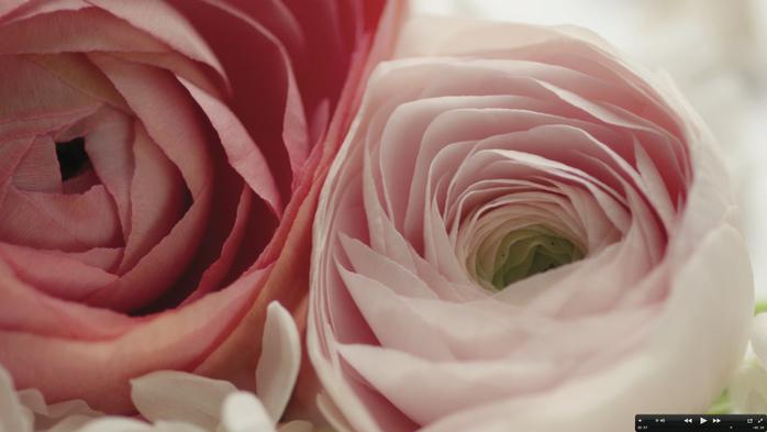 ES-LE-PARFUM-ROSE-COUTURE-ROSES (1) (700x393, 249Kb)