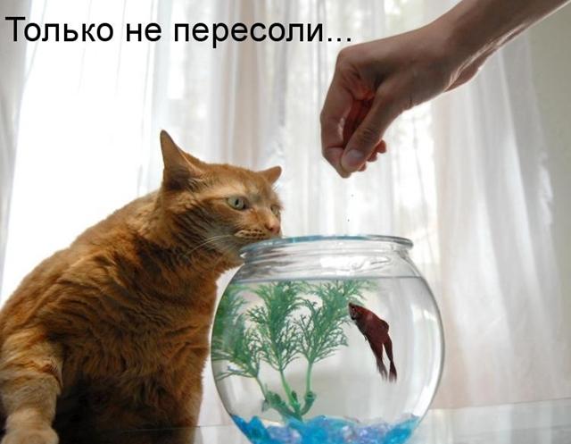4242220_1_aprelya_20a (640x497, 114Kb)