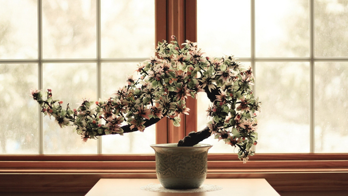 flowers-bonsai-culture-2400x1350-wallpaper (700x393, 292Kb)