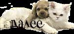 котенок и щенок_S (150x69, 20Kb)