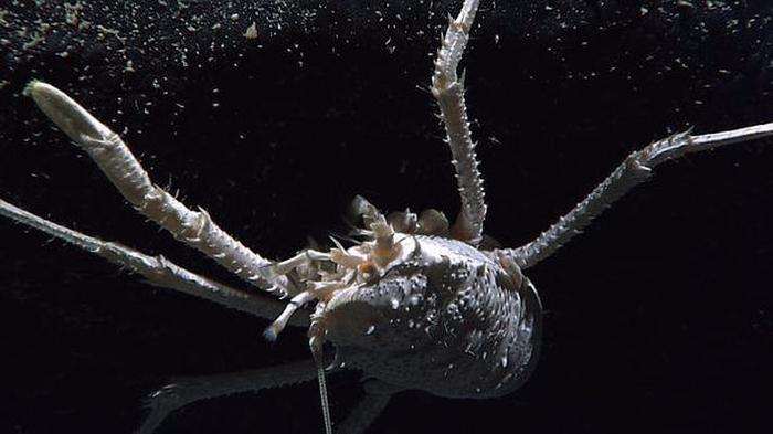 morskie-organizmy-3-8 (700x393, 175Kb)