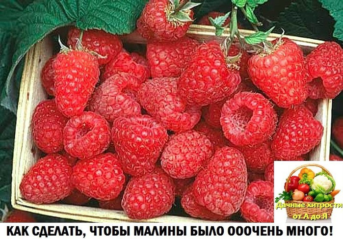 5993110_image_1_ (700x487, 136Kb)