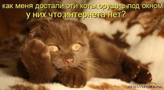 3925073_kot (528x290, 78Kb)