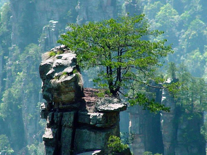 Национальный парк Чжанцзяцзе 20944