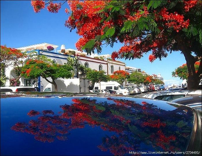 Пуэрто-де-Моган - стопроцентный земной рай 29