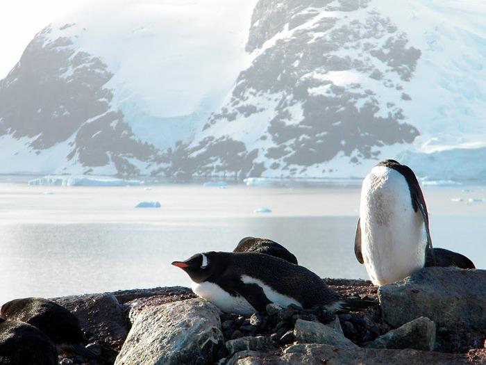 Антарктида 95783