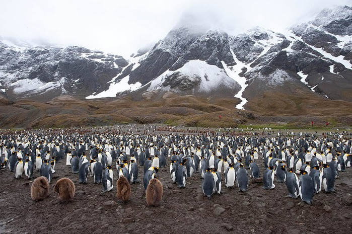 Антарктида 90991