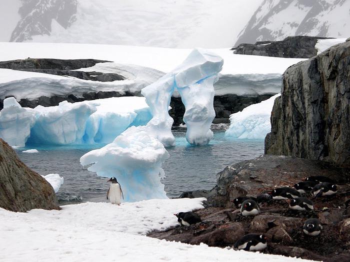 Антарктида 53126