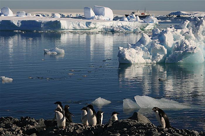 Антарктида 81796