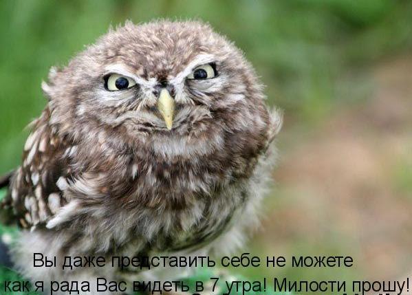 Котоматриця!)))) - Страница 5 64337738_1285144376_nn
