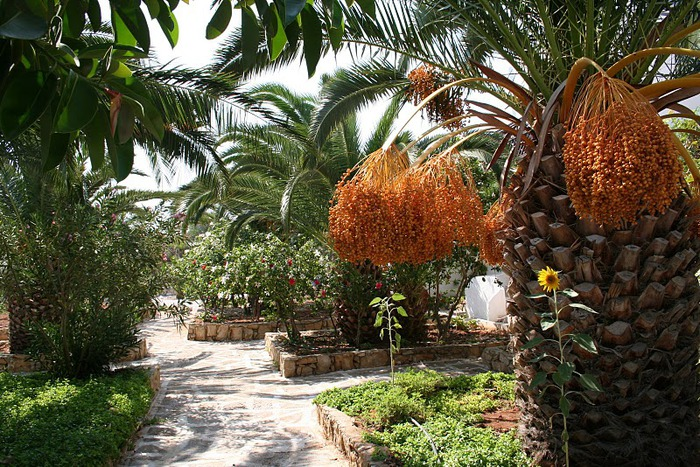 Остров Карпатос - высокие горы, традиционные поселки, пляжи на юге... 99274