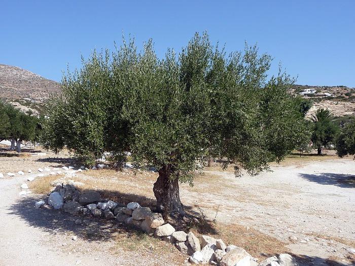 Остров Карпатос - высокие горы, традиционные поселки, пляжи на юге... 88285