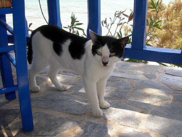 Остров Карпатос - высокие горы, традиционные поселки, пляжи на юге... 32700