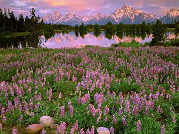 Sunrise Light Along Pilgrim Creek, Grand Teton National Park, Wyoming (600x450, 100 Kb)